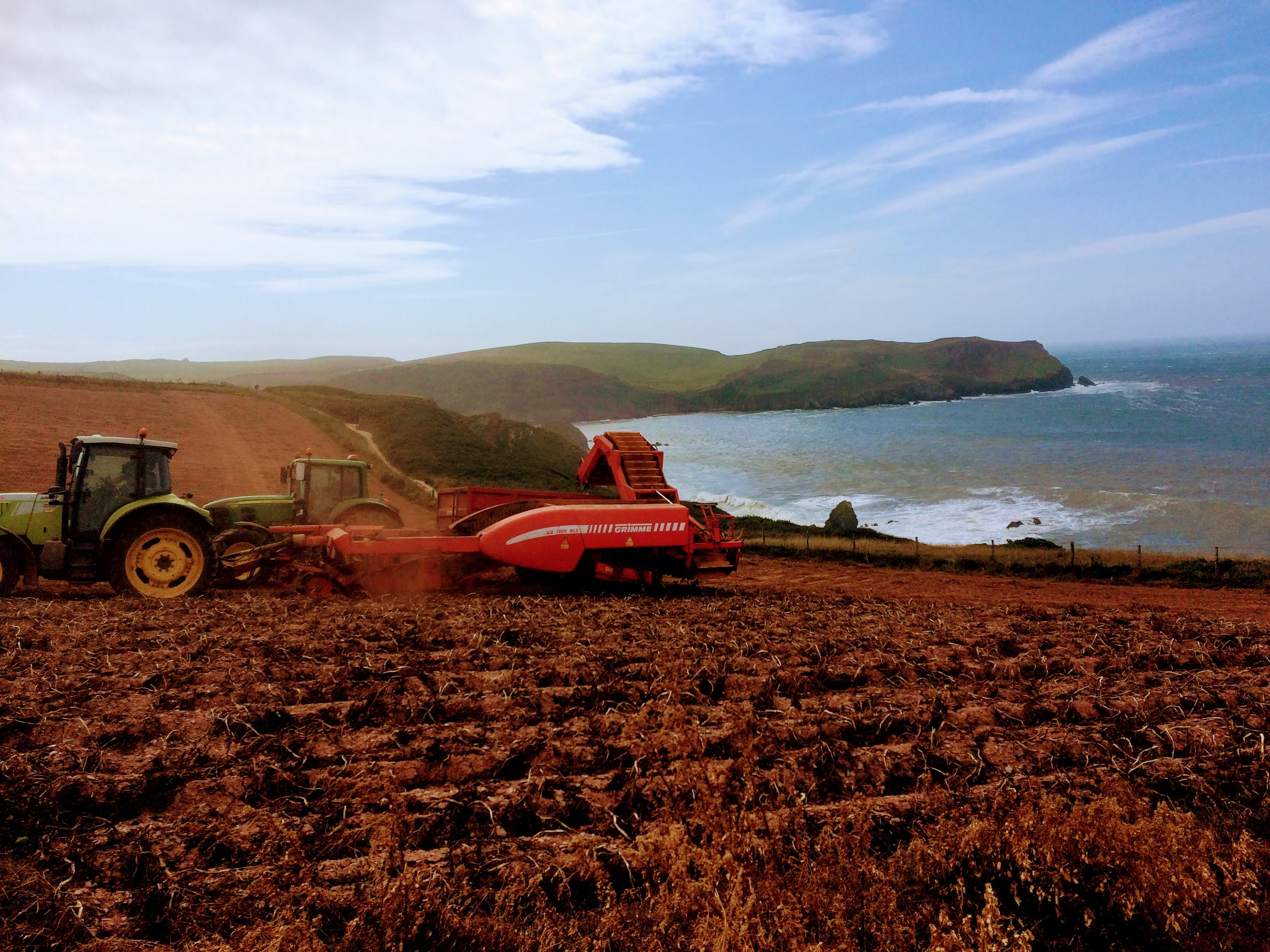 Tractor digging potatoes for Cove Vodka overlooking Hope Cove